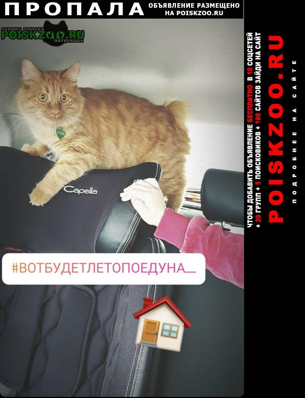 Пропала кошка рыжая курильский бобтейл Клин
