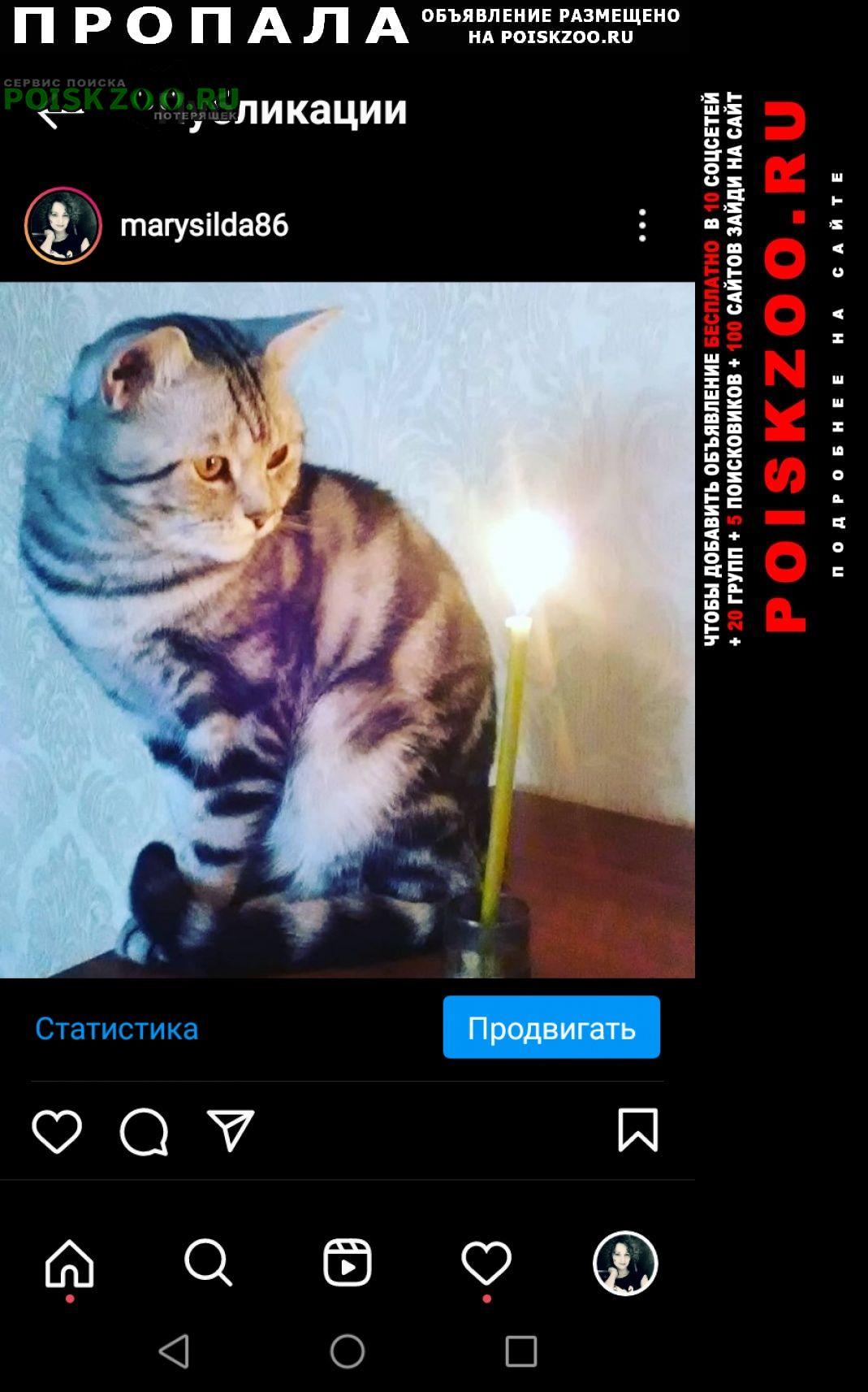 Пропала кошка Астрахань