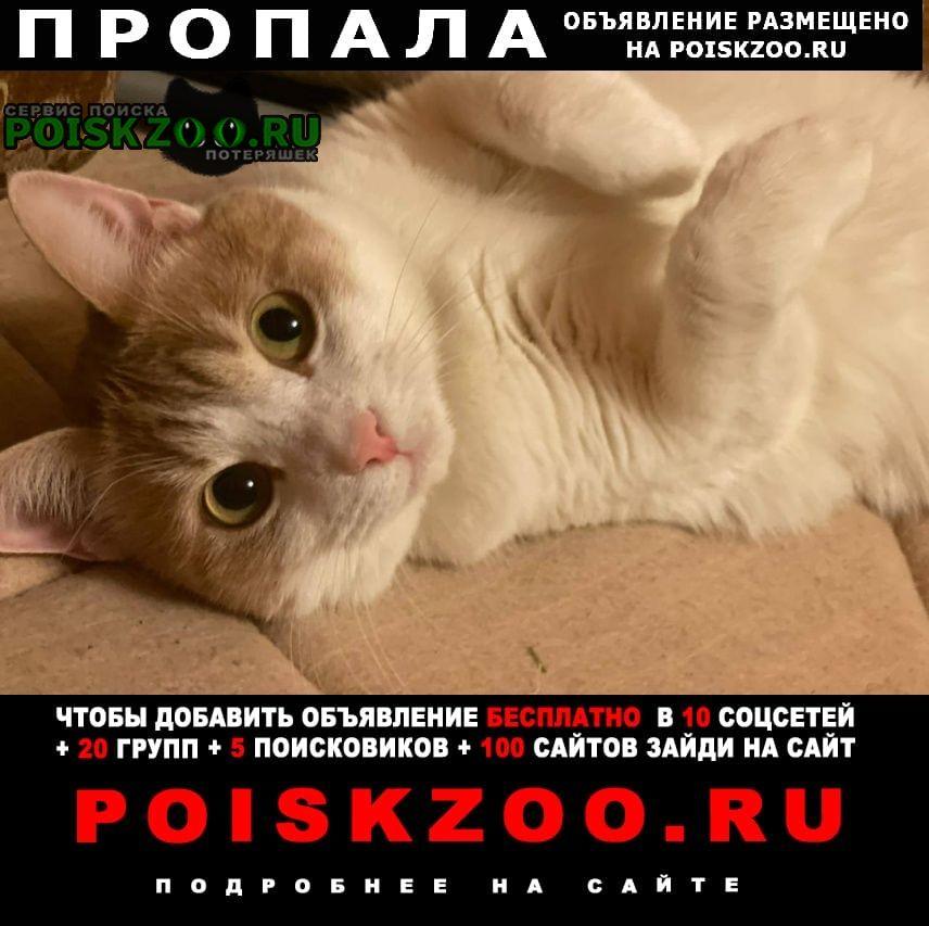 Пропал кот в ленинском р-не Самара