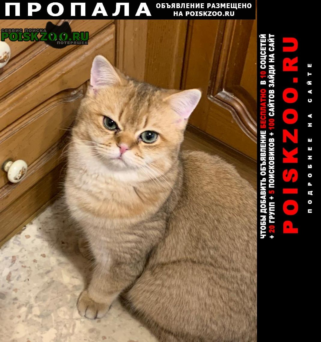 Пропал кот, возраст 1 год Михнево
