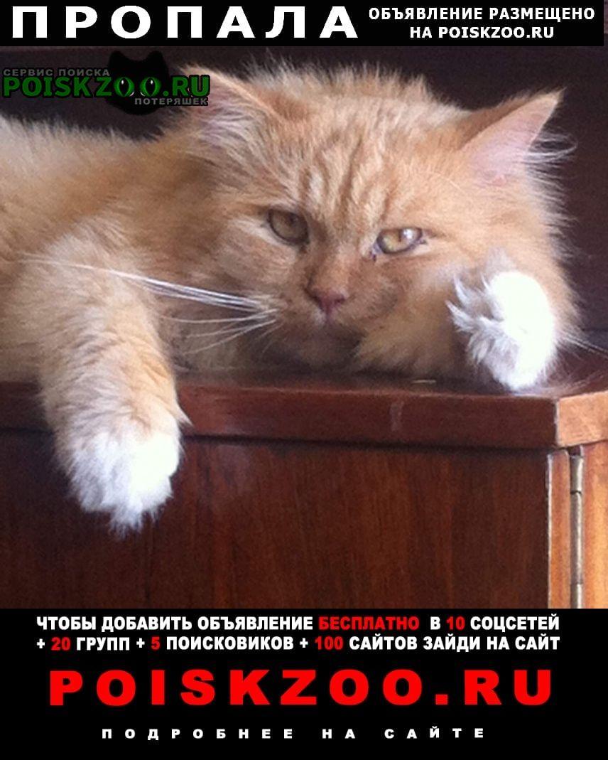 Пропал кот Домодедово