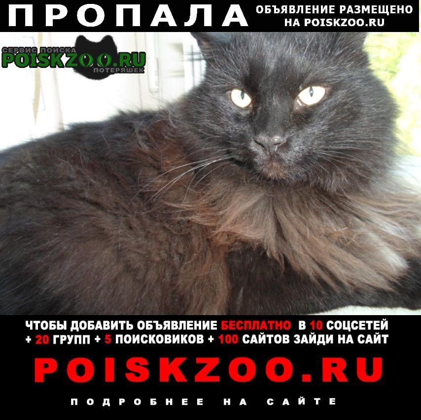 Пропал кот черный пушистый сибирской породы Зеленодольск