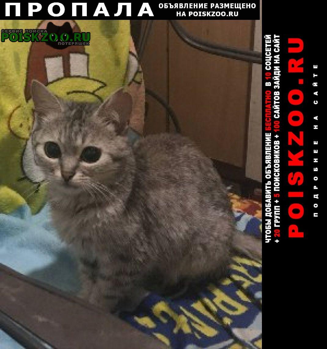 Пропала кошка Днепропетровск