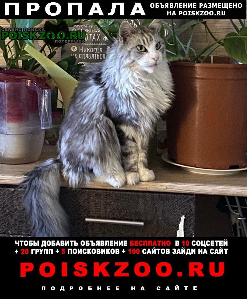 Пропал кот (взрослый мейкун) некрупного размера Красногорск