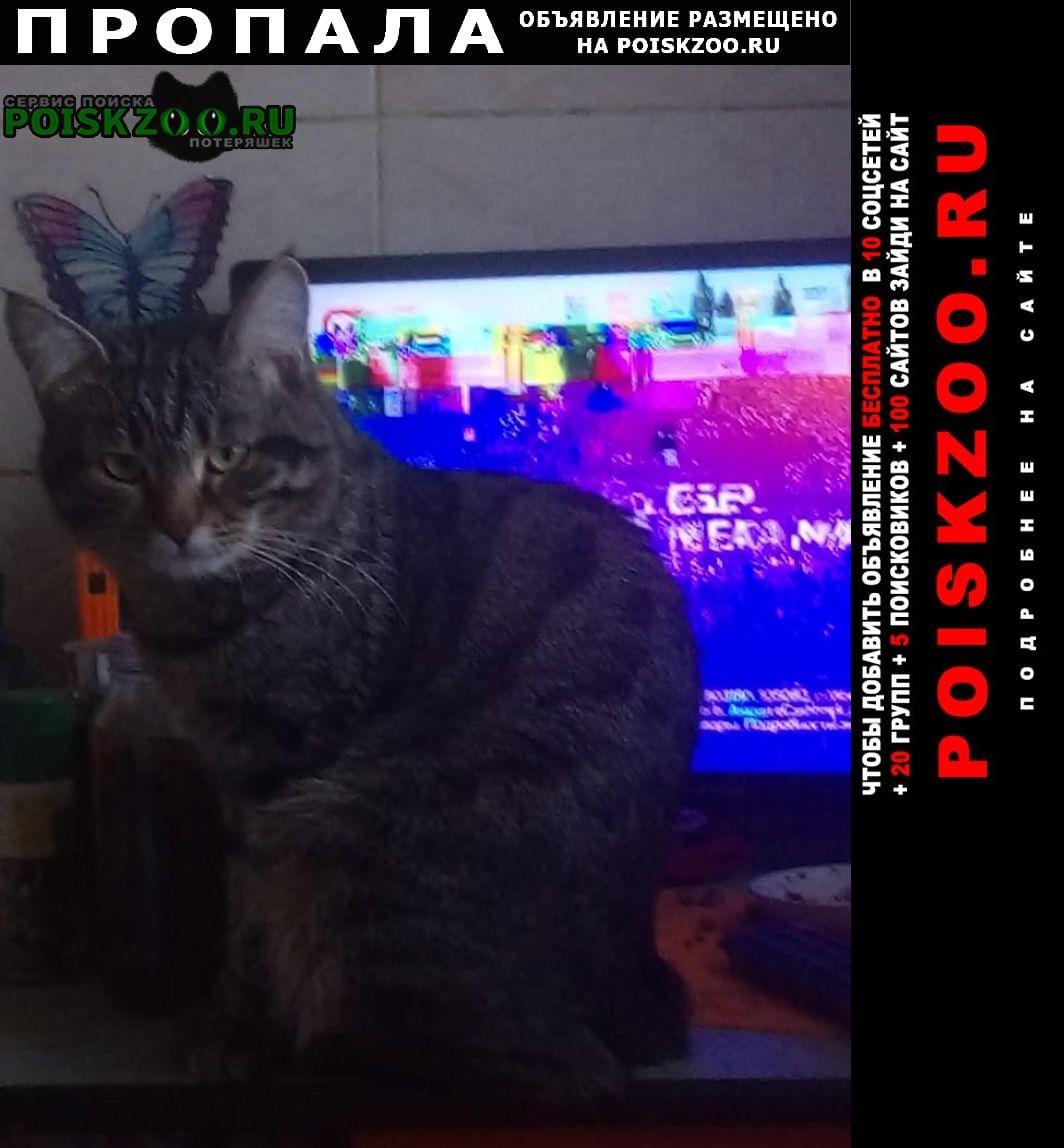 Пропала кошка кот Снежинск (Челябинская обл.)