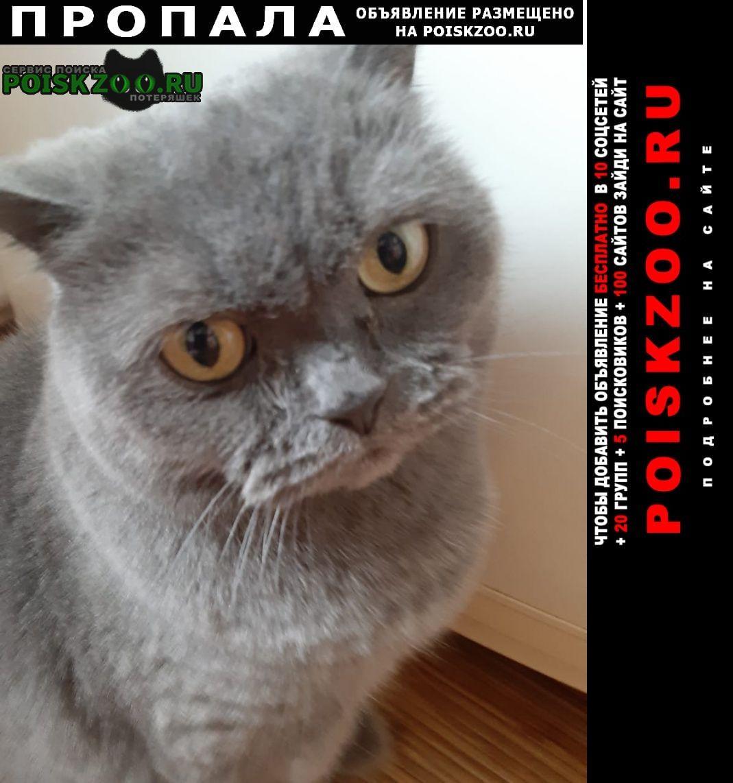 Пропала кошка ул. целинная ул.3-а-1 Сочи