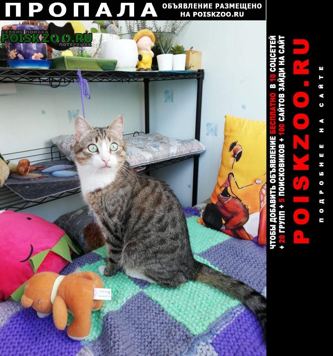 Пропал кот на киселевке Смоленск