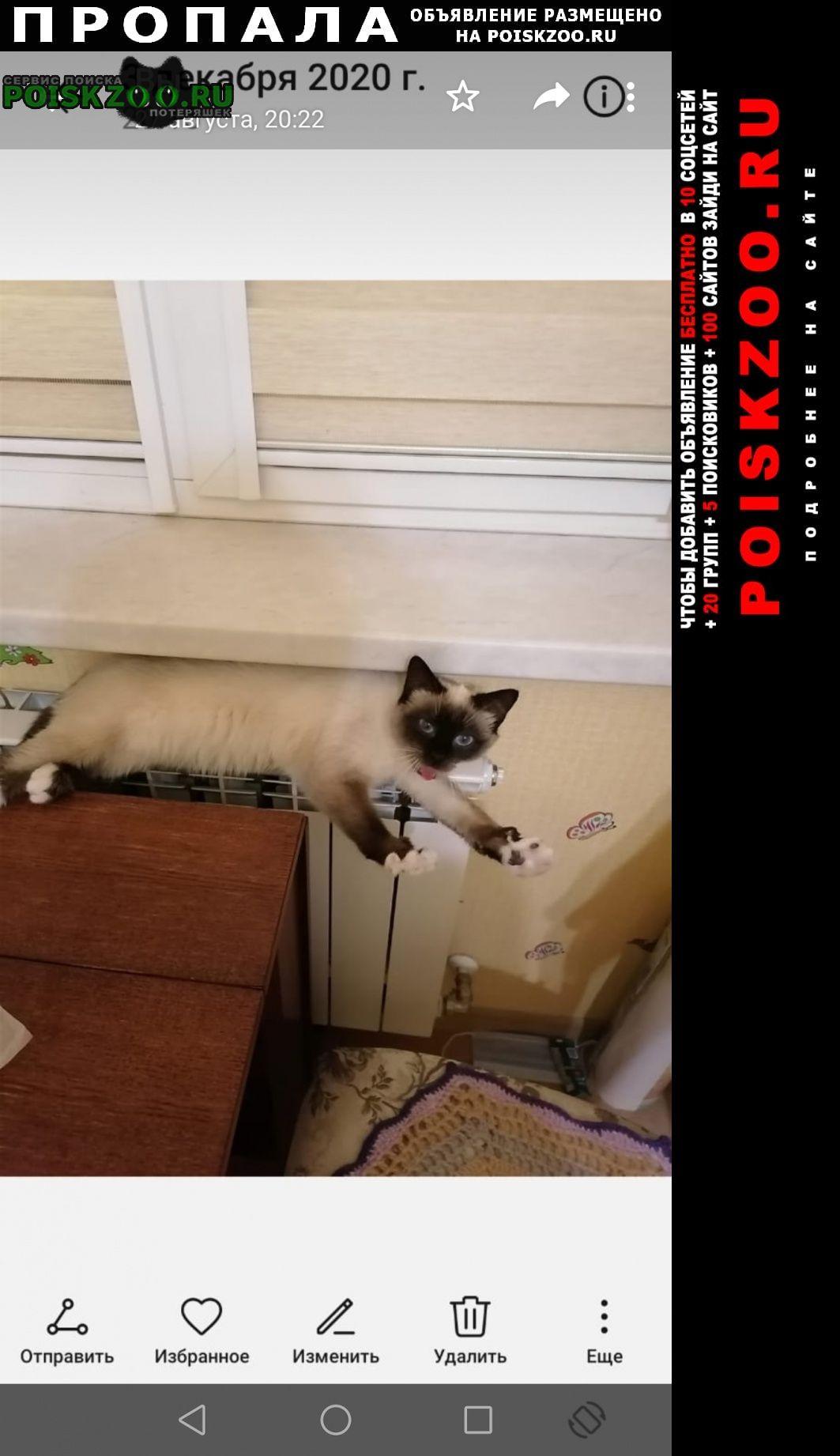 Пропала кошка зовут алиса, сиамская Брянск