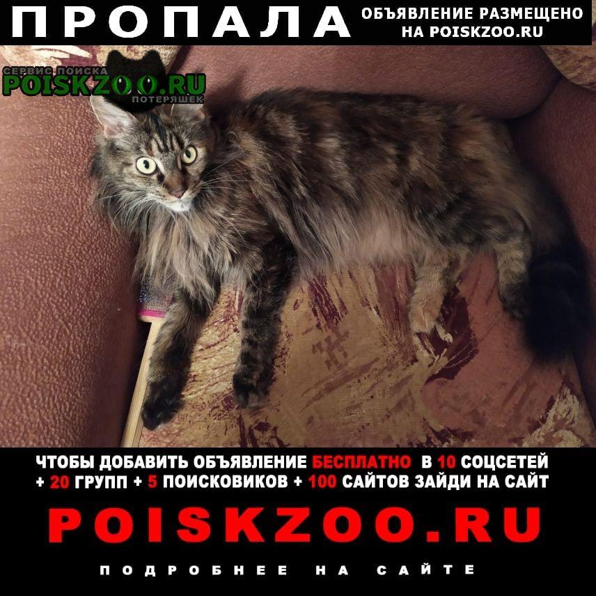 Пропала кошка порода мейн кун Россошь