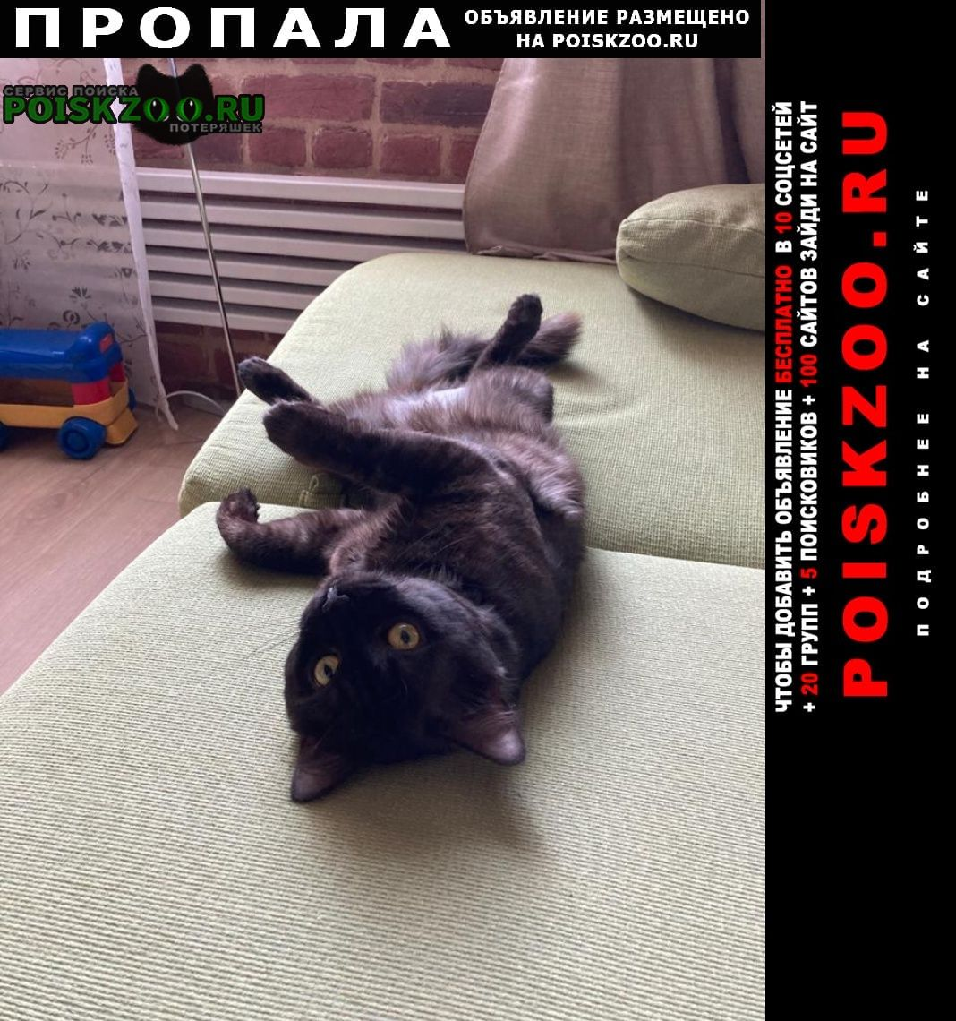 Пропал кот Троицк
