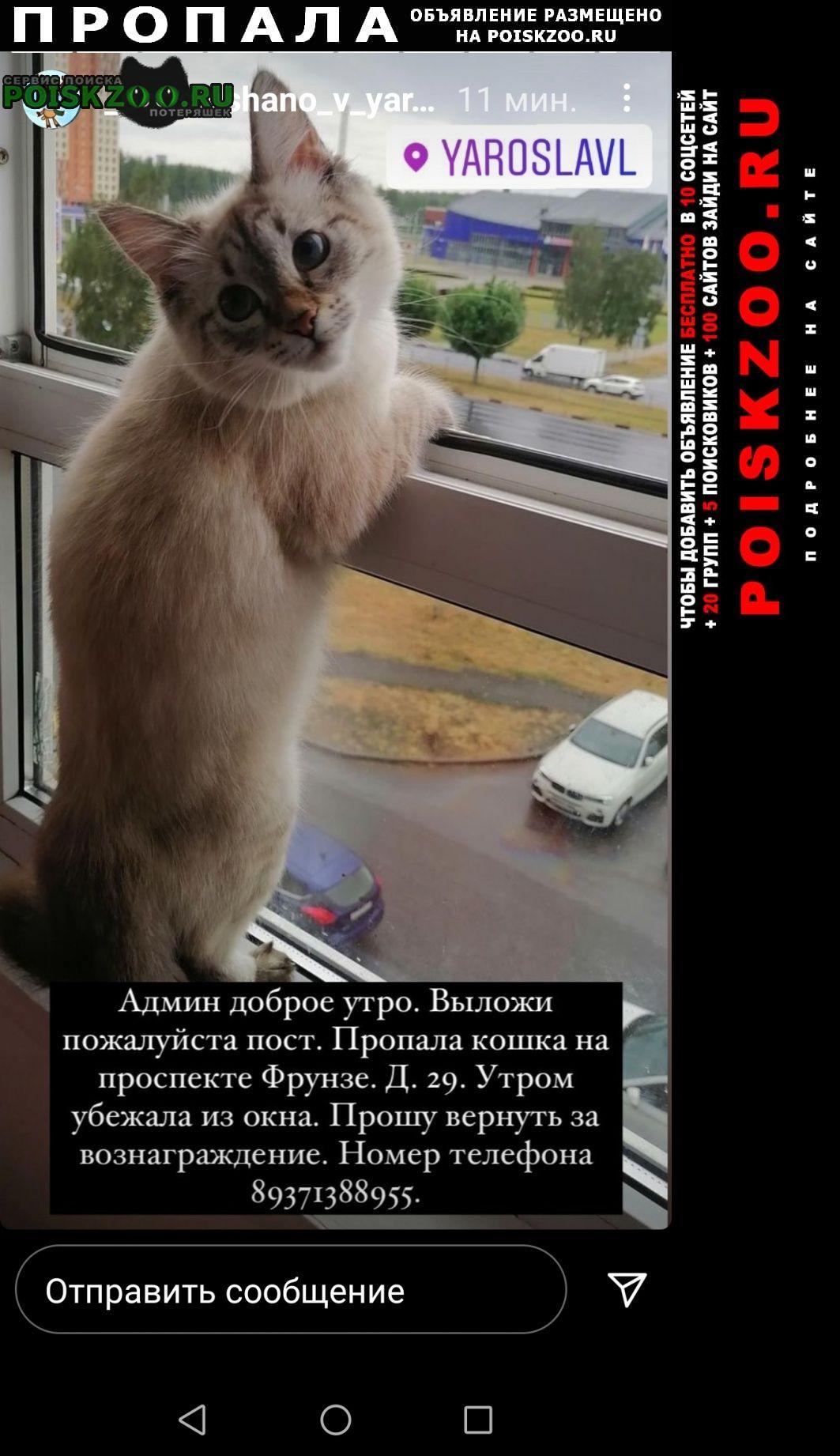 Пропала кошка на проспекте фрунзе. Ярославль