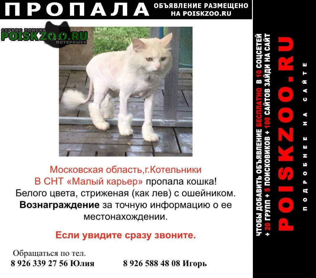 Пропала кошка Котельники