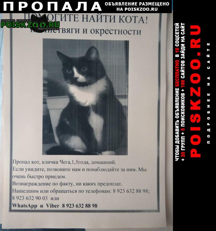 Пропал кот Новокузнецк