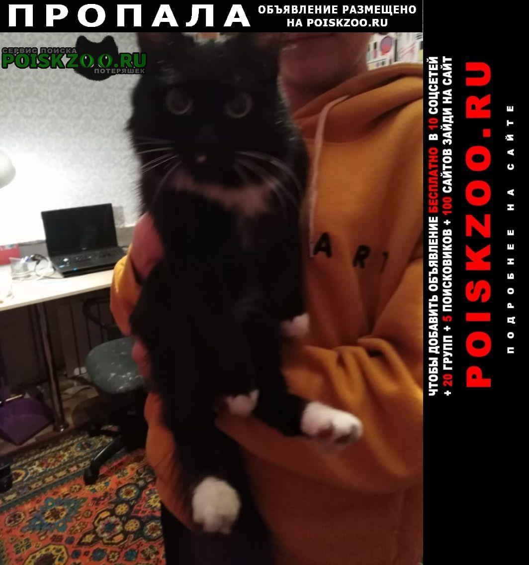 Пропала кошка Иркутск