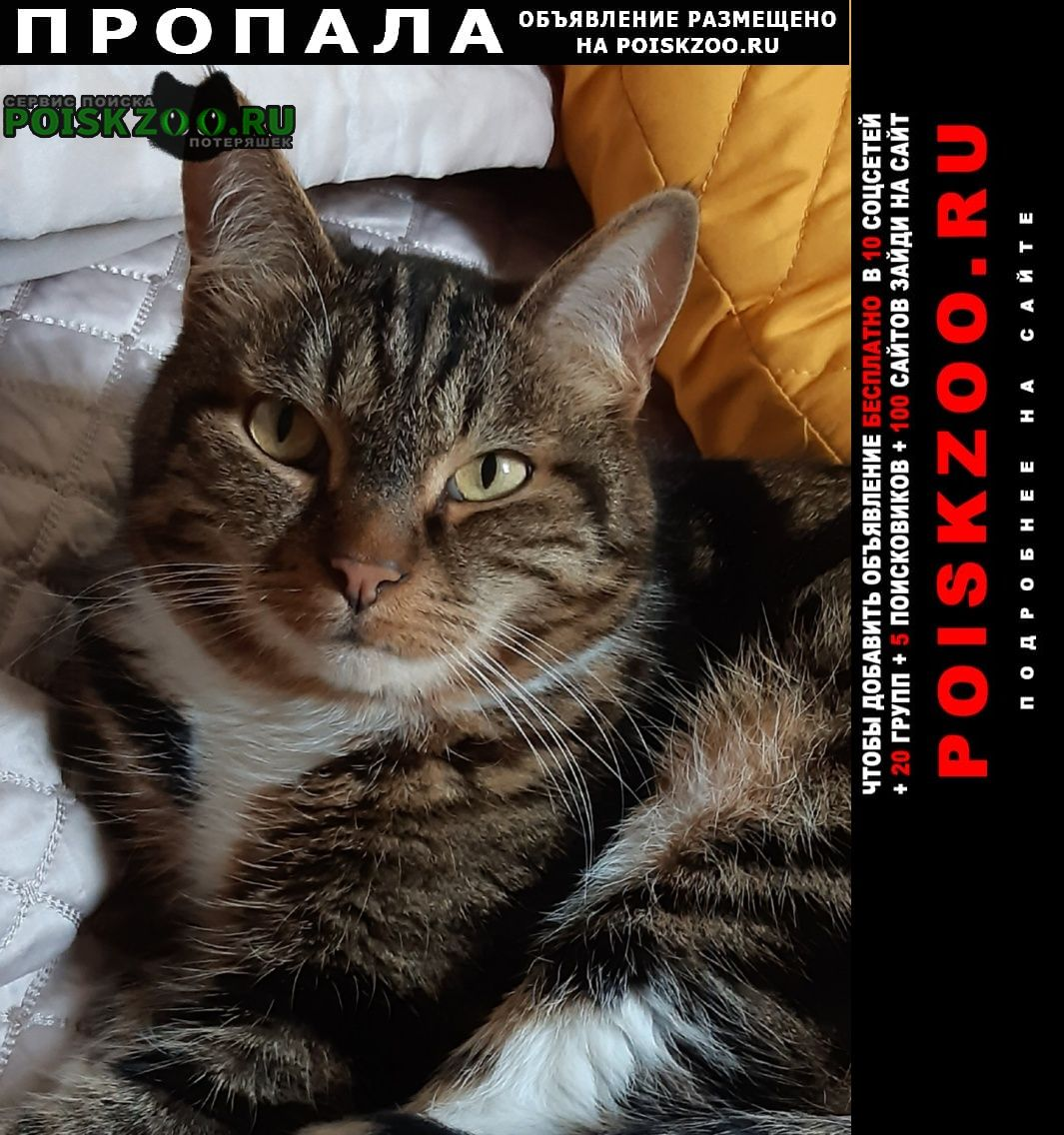 Пропал кот Петрозаводск