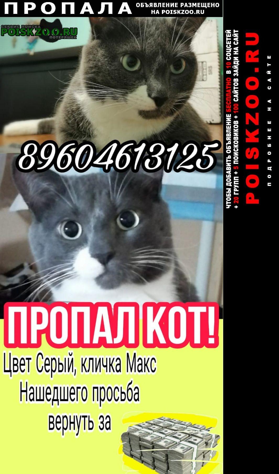 Пропал кот помогите Ростов-на-Дону