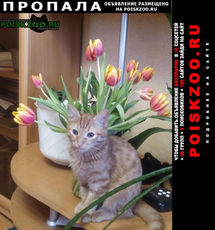 Пропал котик рыженький 8 августа Уфа