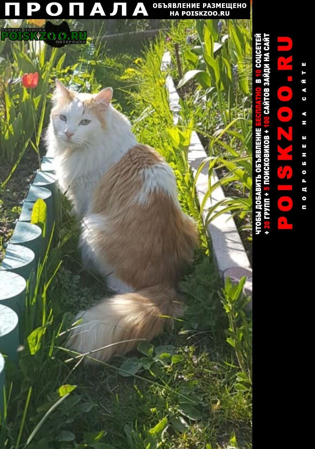Пропал кот помогите найти кешу Санкт-Петербург