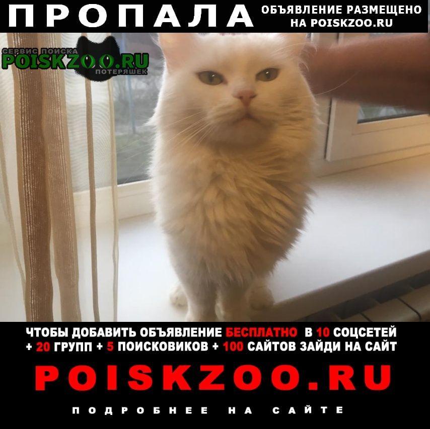 Пропала кошка Анапа