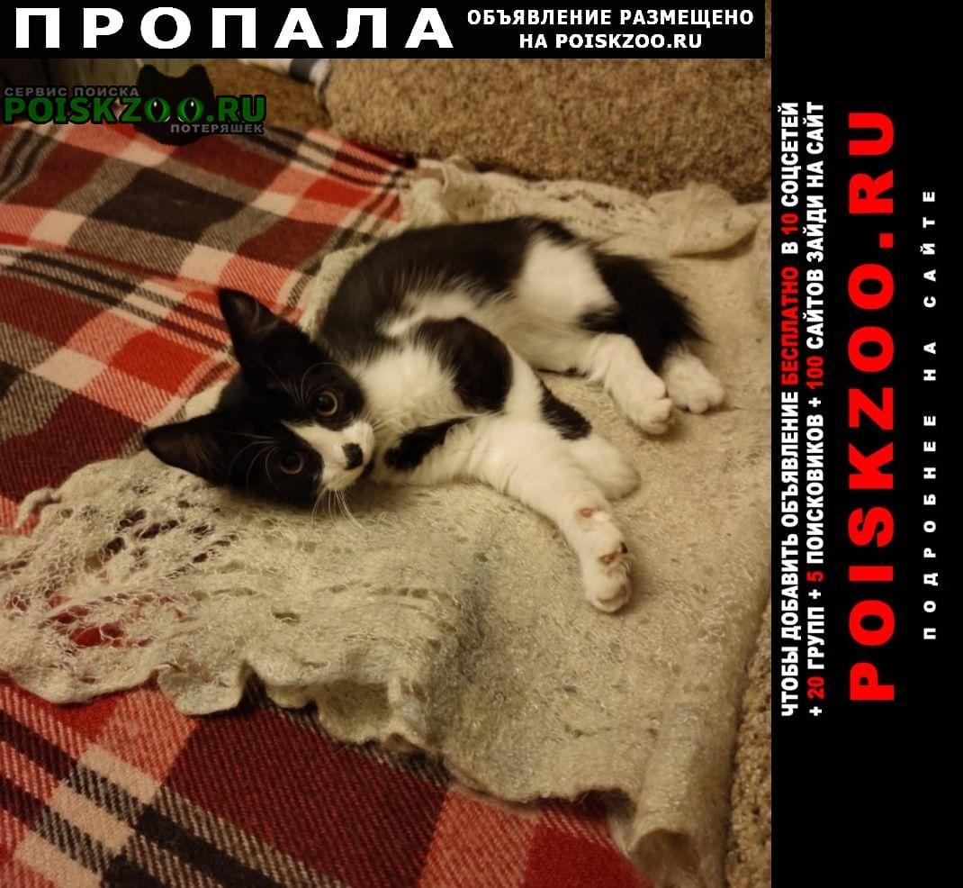 Пропал котёнок Чехов