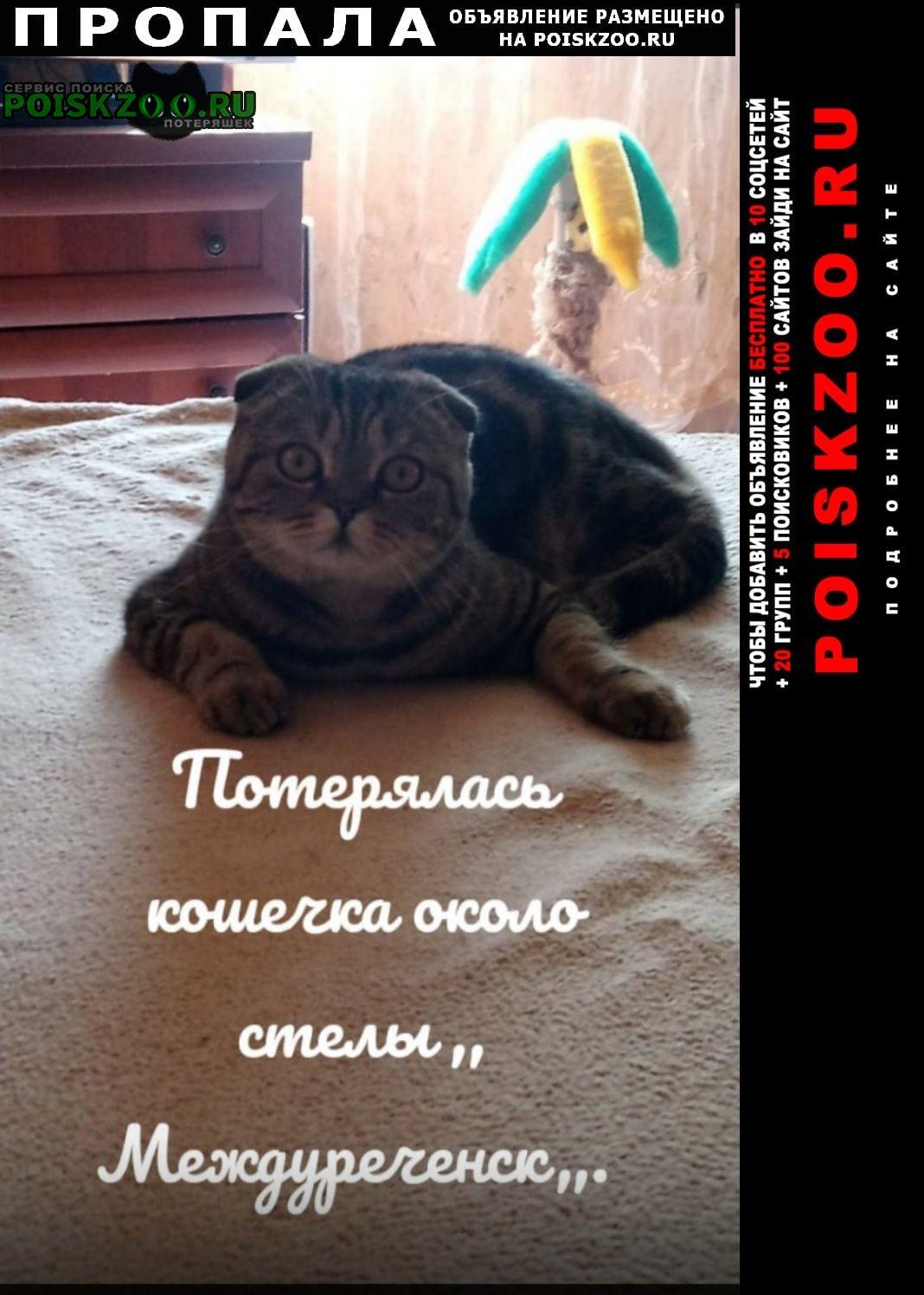 Пропала кошка Междуреченск