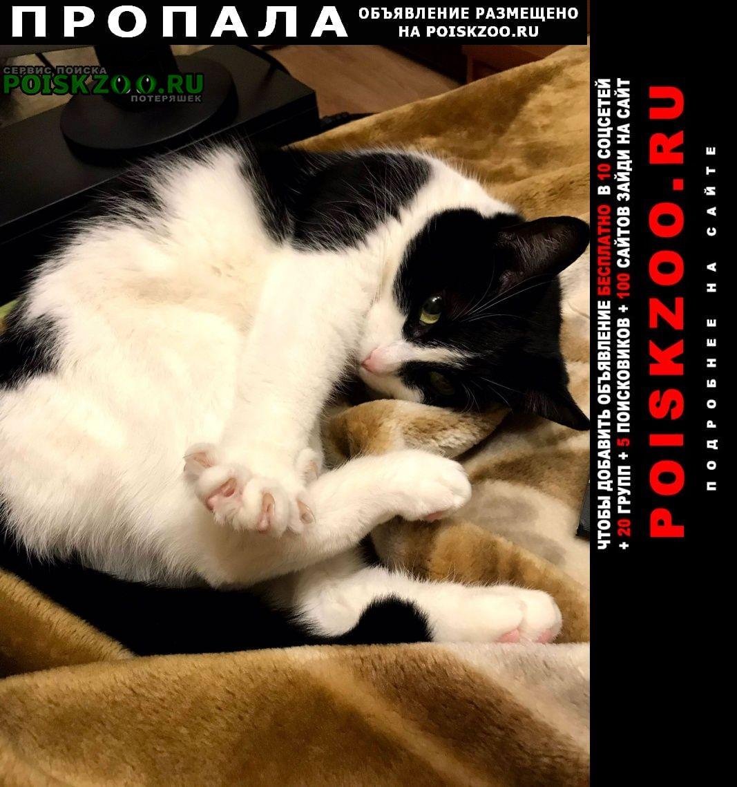 Пропала кошка черно-белая упала из окна Санкт-Петербург