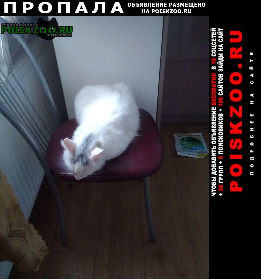 Пропал кот снежок в фокинском р-не Брянск