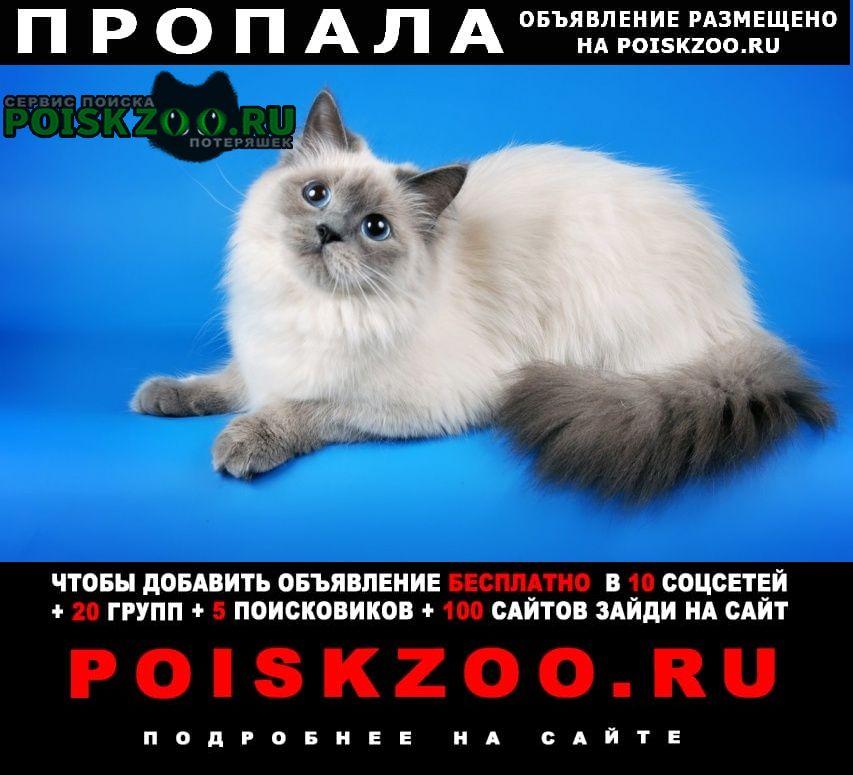 Пропал кот (район уральского рынка) Нефтекамск