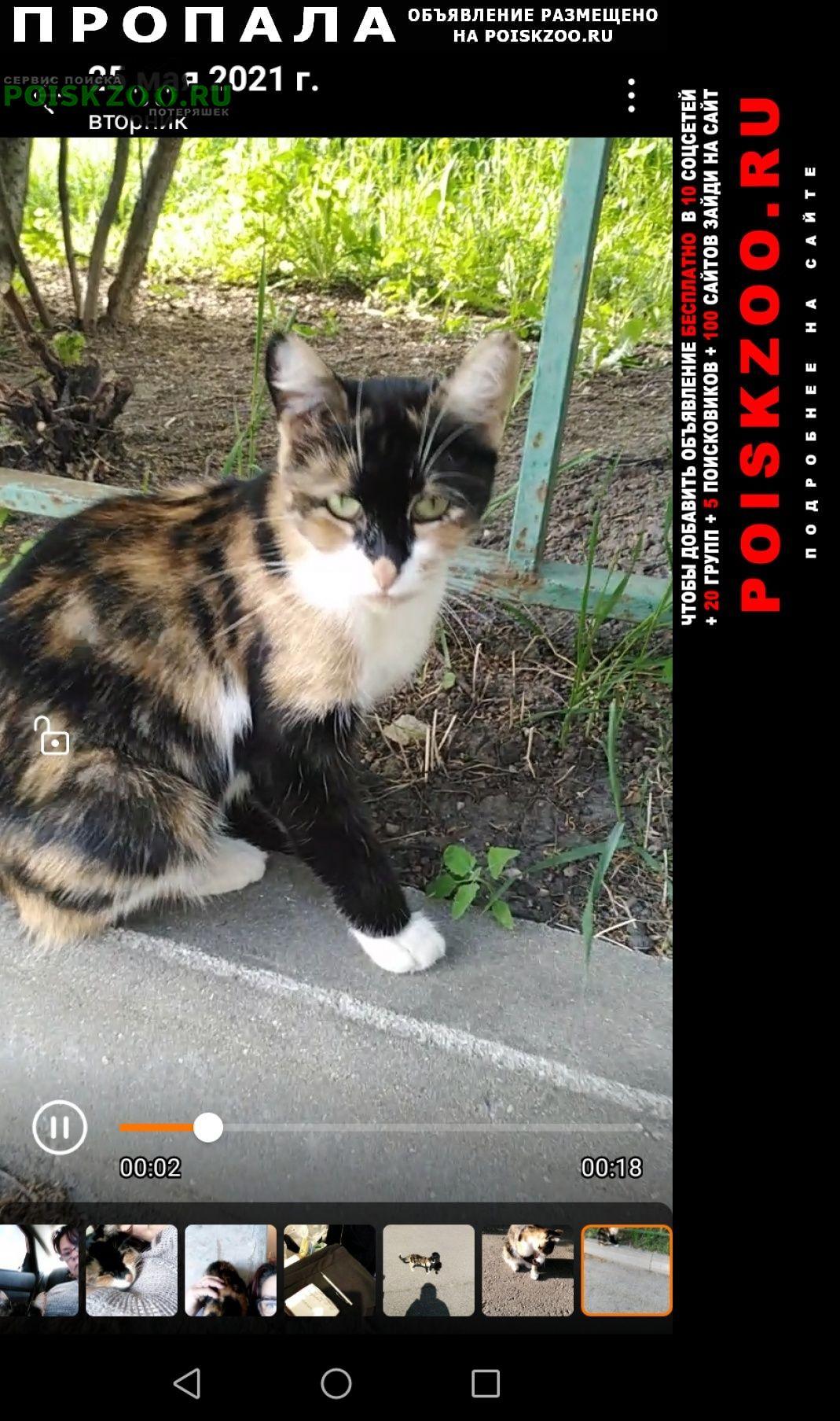 Пропала кошка маня-маняша, в деревне сел Домодедово