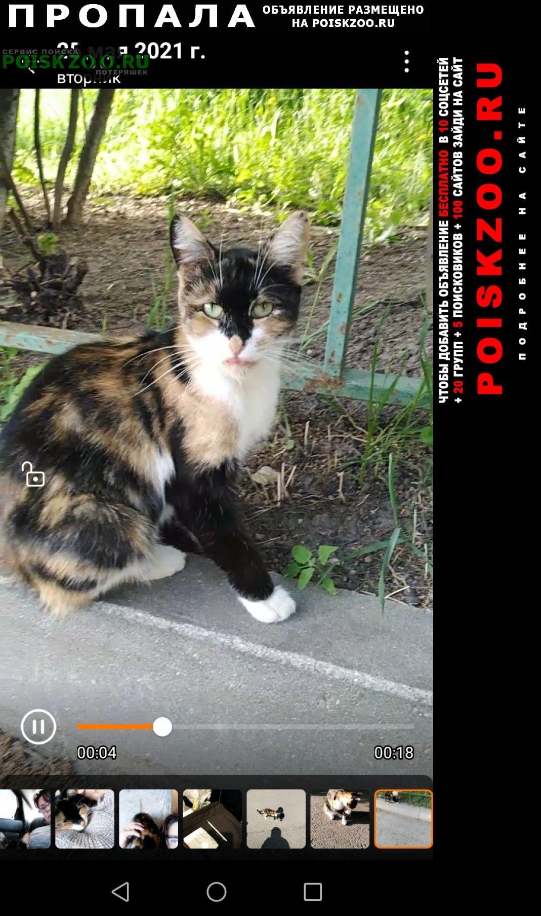 Пропала кошка деревне сельвачево 6км от аэропорта Раменское
