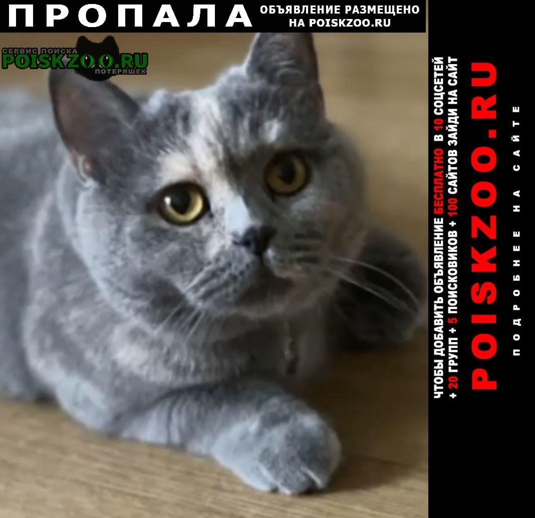 Пропала кошка помогите найти кошку Домодедово