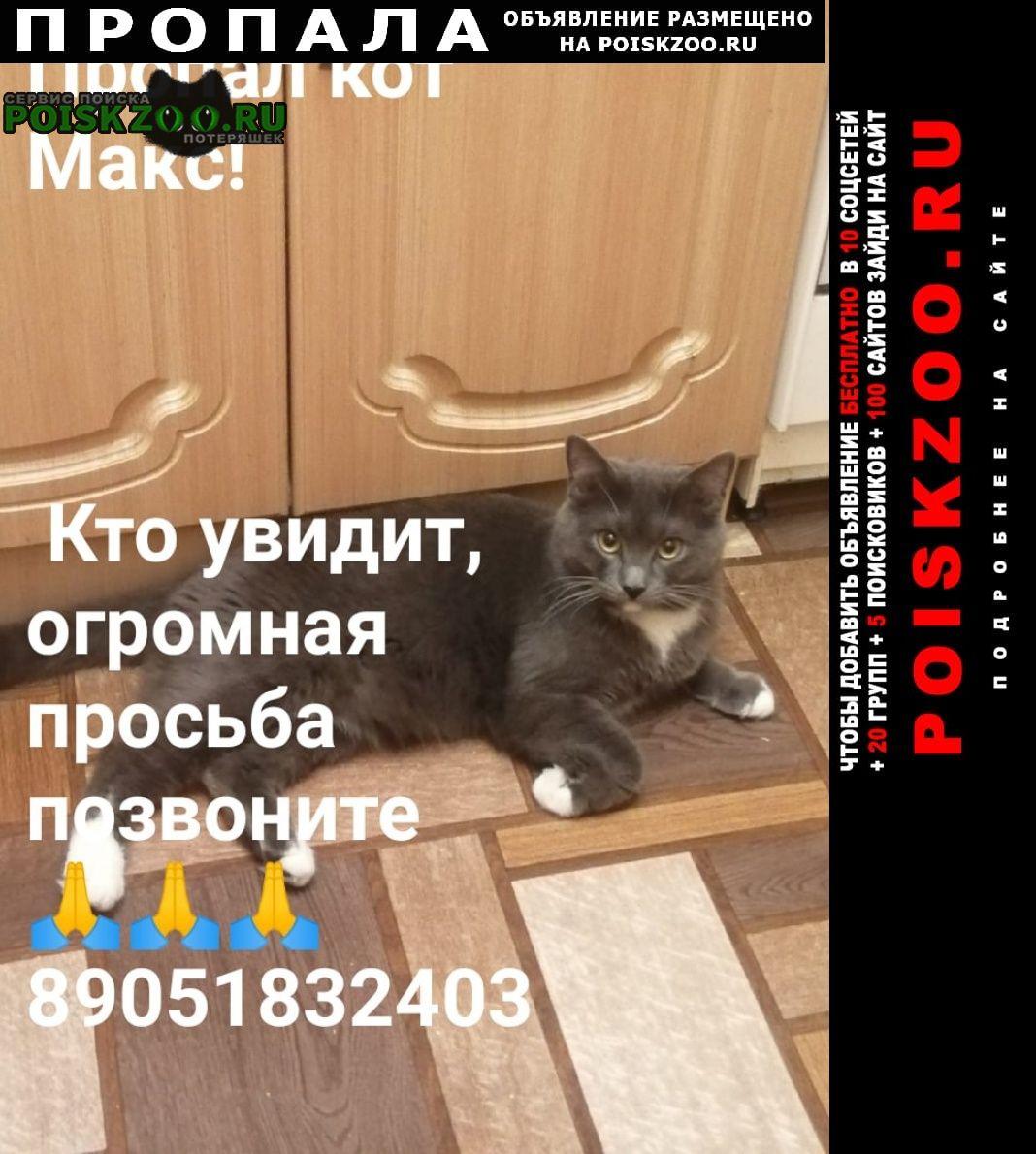 Пропал кот макс Ульяновск