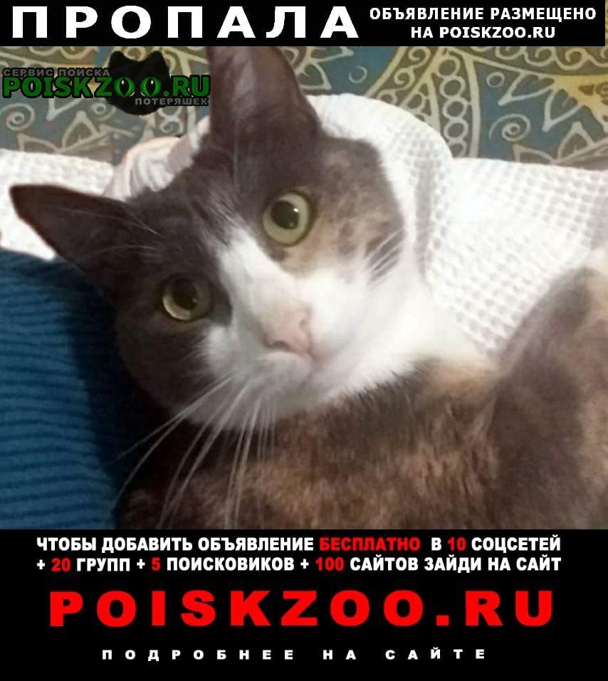 Пропала кошка в конце июля Нарофоминск