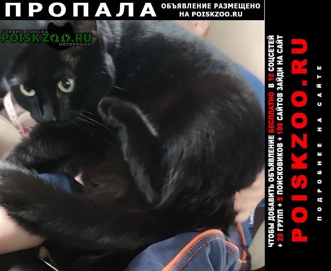 Пропал кот раменский район д.хрипань Раменское