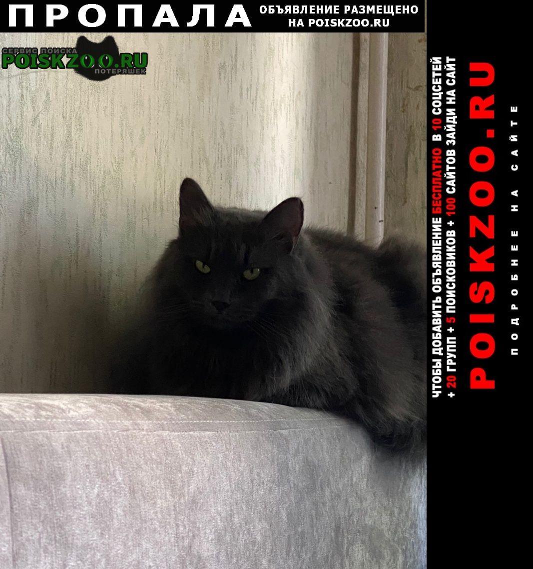 Пропала кошка феликс, кастриррванный, большой Малоярославец