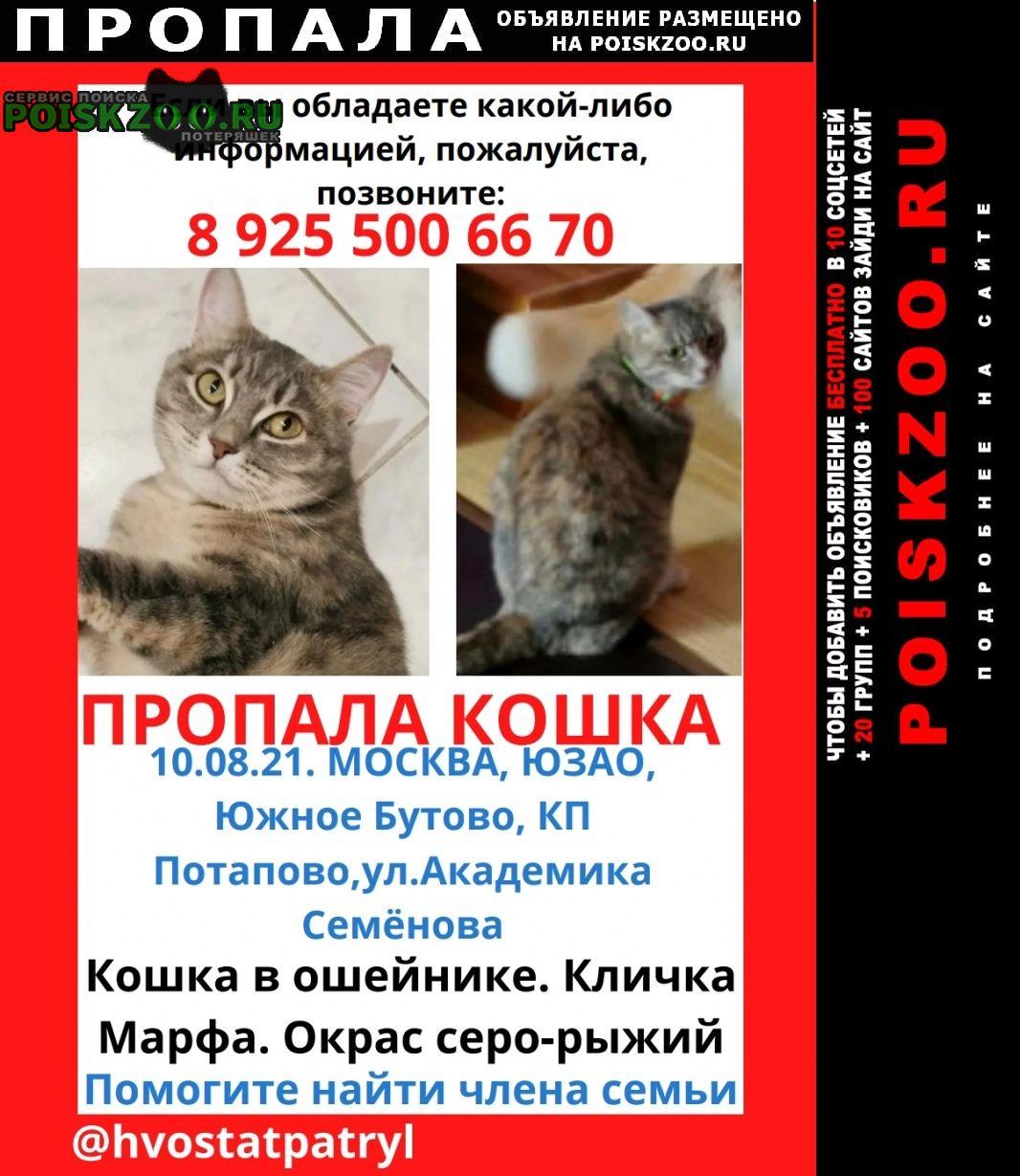 Пропала кошка в южном бутово кп потапово Москва