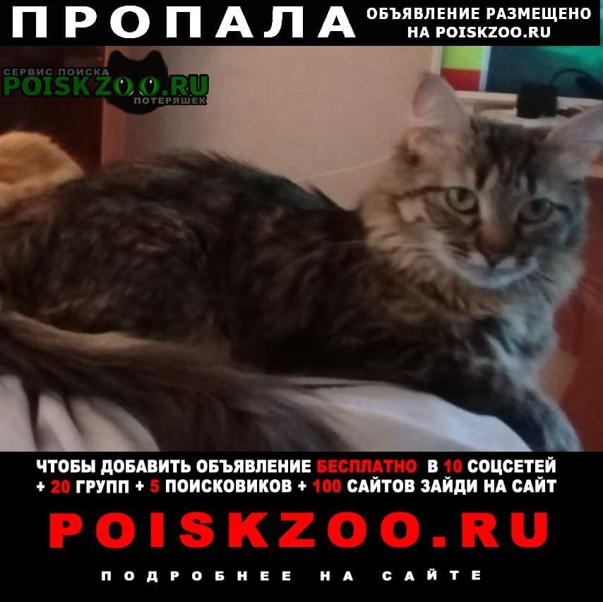 Пропала кошка помогите найти кошечку за вознаграждение Москва