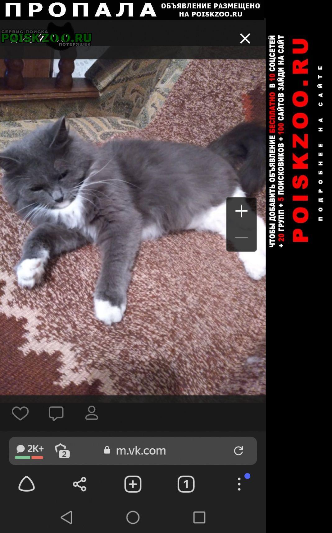 Пропала кошка Пенза