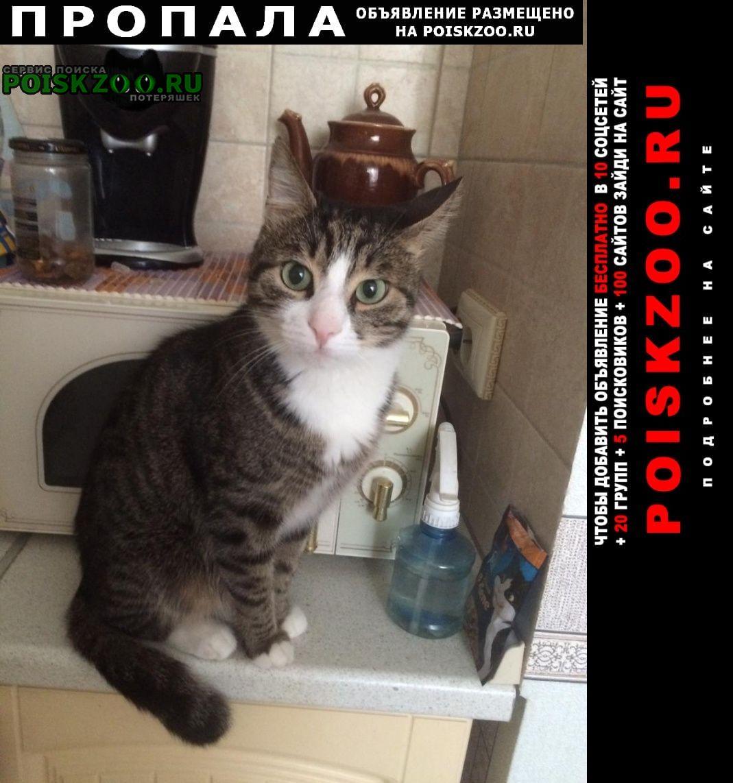 Пропал кот ищем Москва