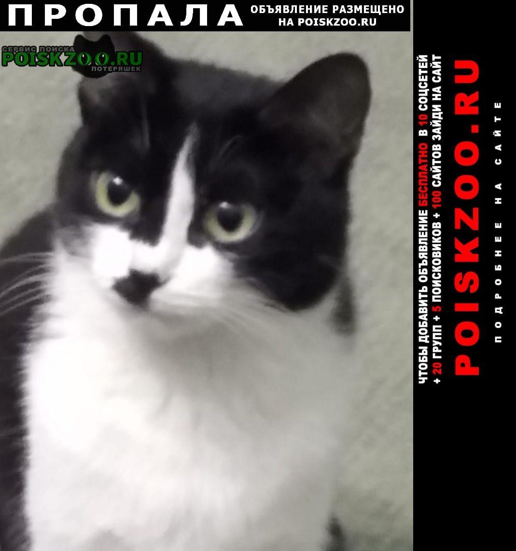 Пропала кошка Копейск