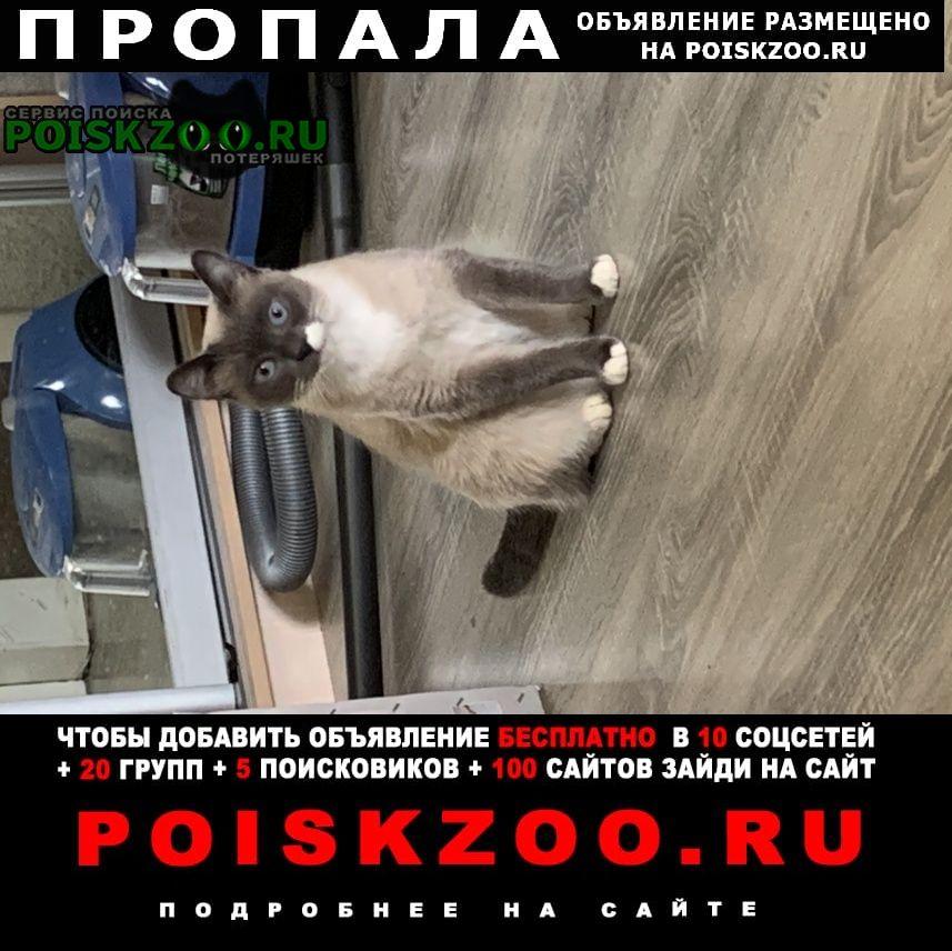 Пропала кошка Шаховская
