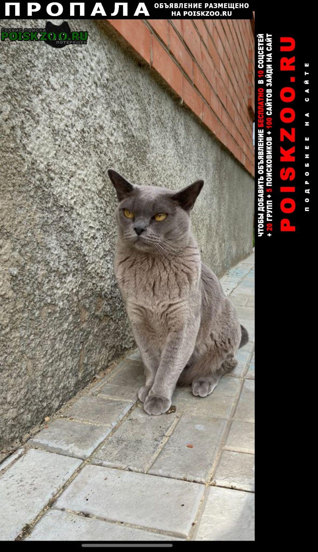 Пропал кот порода бурма ( ) Нахабино