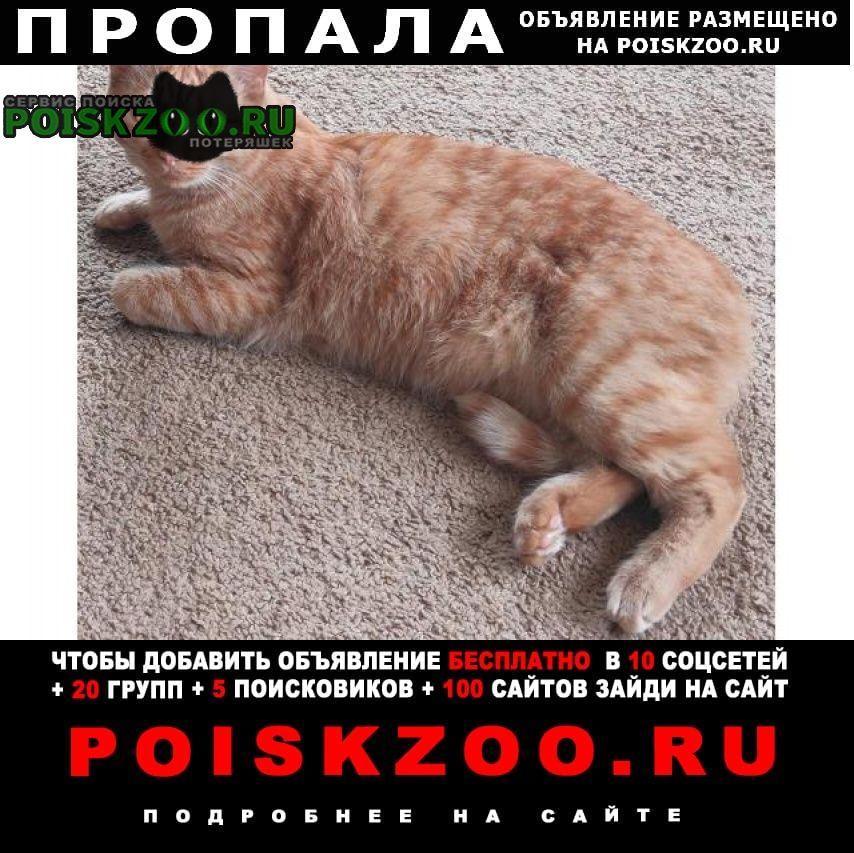 Пропал кот невский. пр. пятилеток д.15/2. рыжий Санкт-Петербург