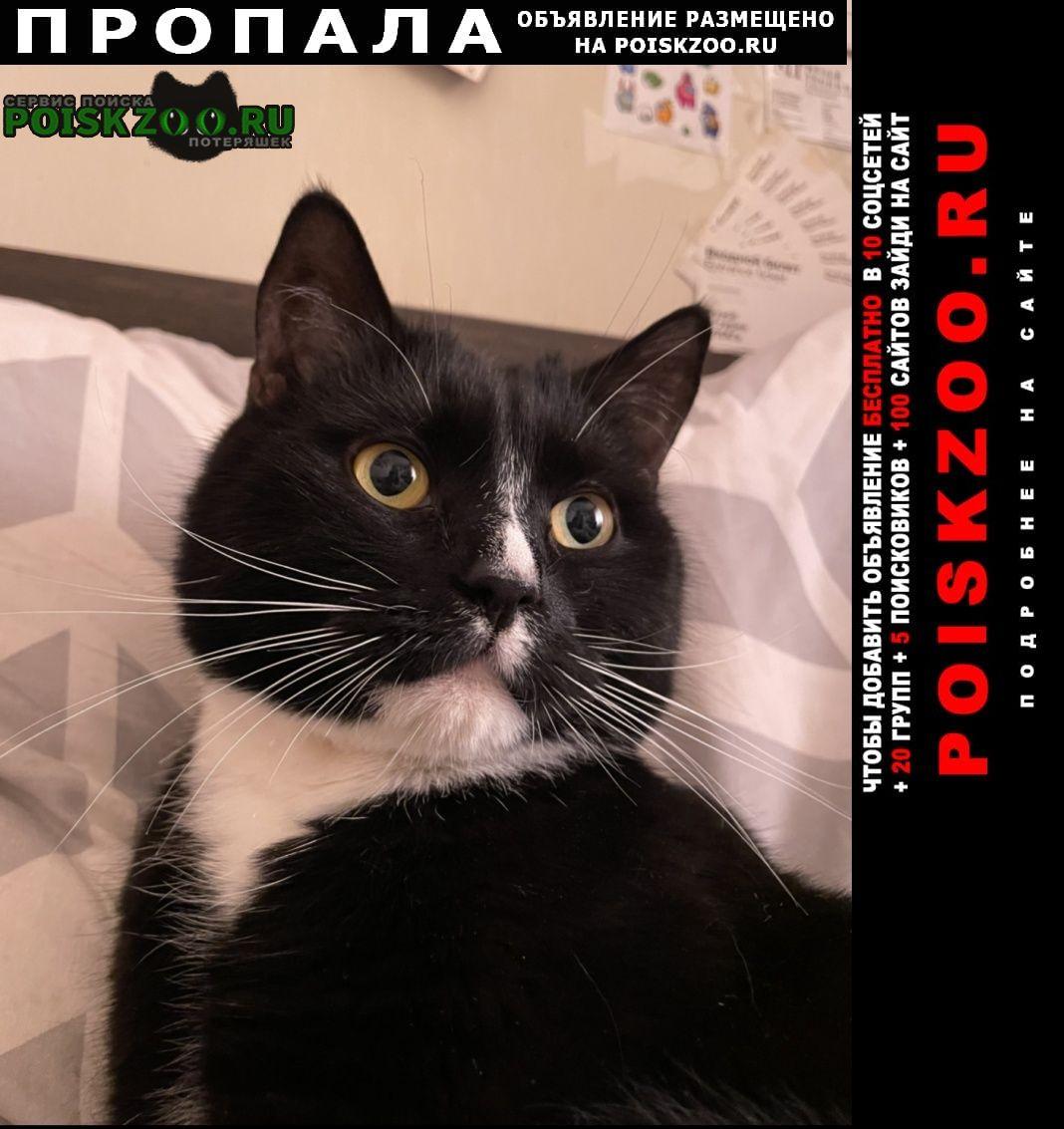 Пропал кот 13 августа Москва