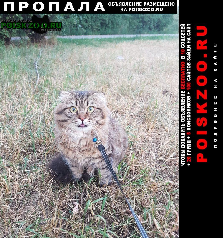 Пропала кошка кот в шотландский вислоухий Волгодонск