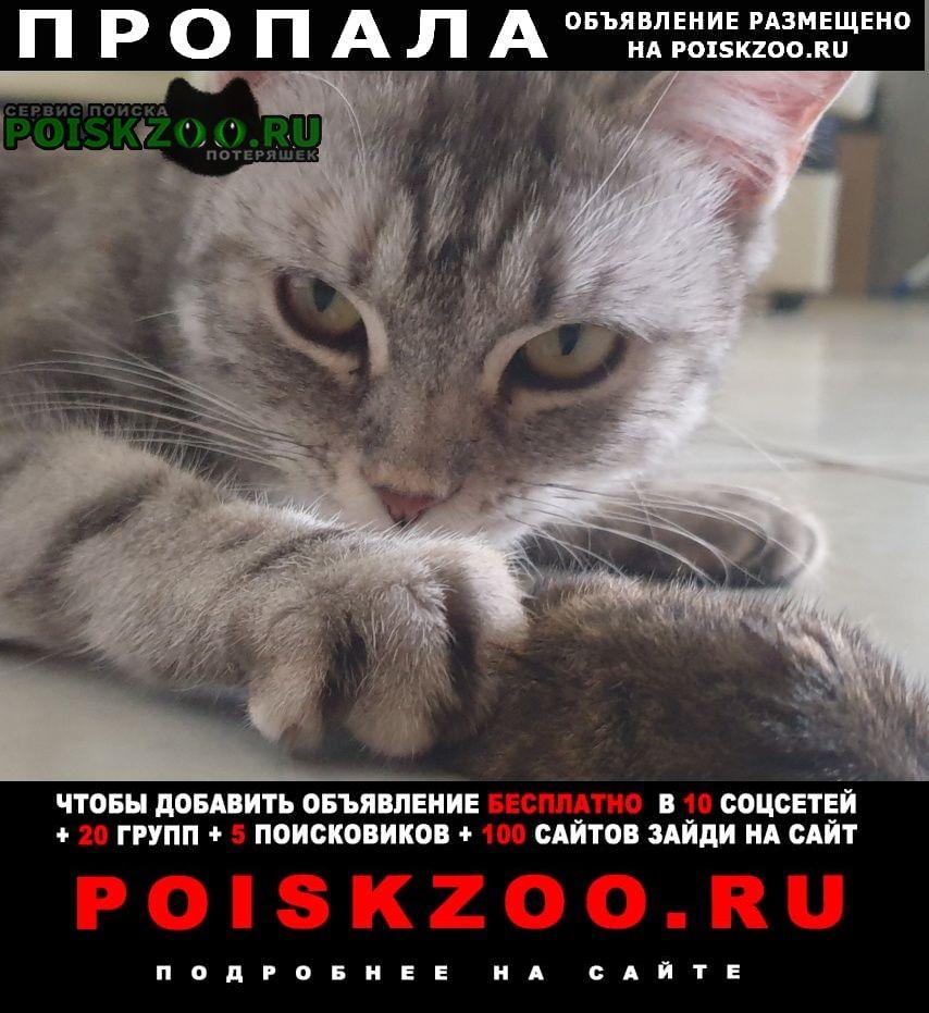 Пропала кошка снт березово. попала Москва