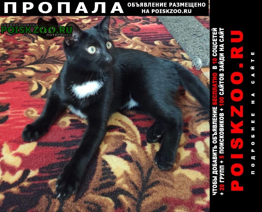 Пропала кошка кот султан Одинцово