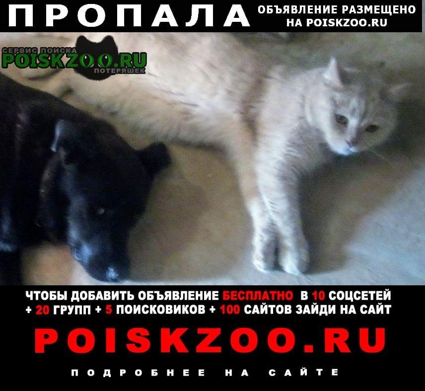 Пропал кот персиковый в заволжском район Ярославль
