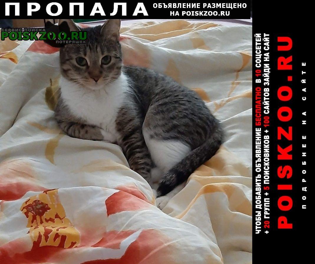 Пропала кошка 17.08 Москва