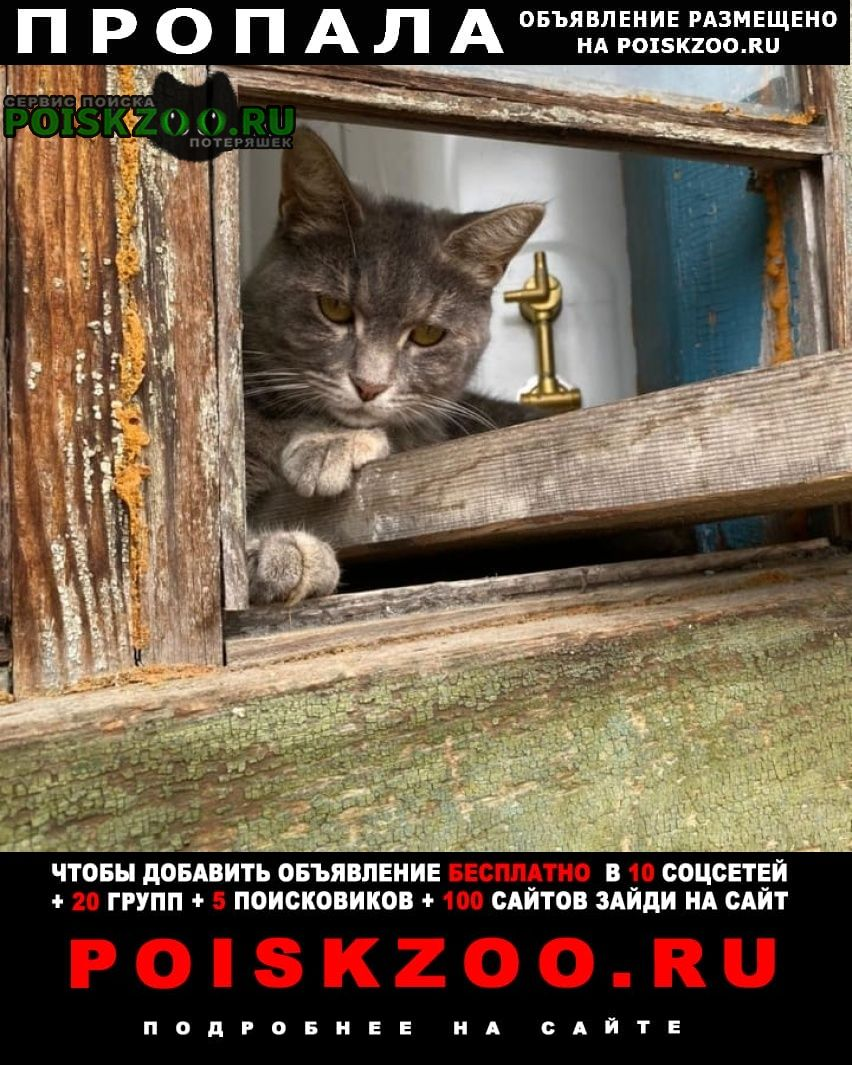 Пропала кошка Белоярский (Свердловская обл.)